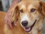 Dog Shelter Phuket